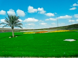 Beautiful greenery of Dubai