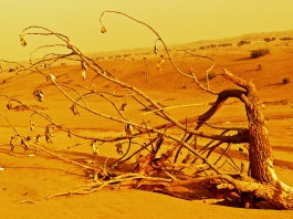 Beautiful Desert of Dubai